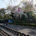 写真: 小田原城  こども遊園地 ゴーカード場