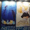 Photos: アニメジャパン2018 ぐらんぶる&寄宿学校のジュリエット