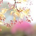 Photos: ちっさな春