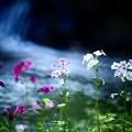 Photos: 日光の水