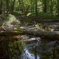 Photos: 日光の森