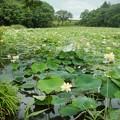 写真: ミセススローカムの沼