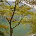 写真: 秋風