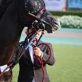 Photos: エイシンヒカリ (2)