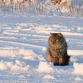 写真: 野良猫の鋭い眼力