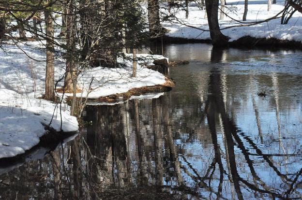 写真: 木々を映す川の流れ