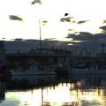 写真: 夜明けの漁港