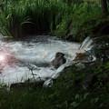 写真: 川の流れのように