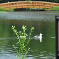 Photos: ヒメジョオンが咲く風景