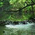 写真: 夏の小川の風景その1