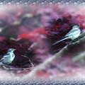 写真: ハクセキレイ幼鳥たちの楽園