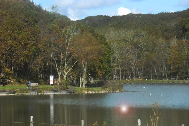 昼下がりの金太郎の池