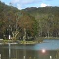 写真: 昼下がりの金太郎の池