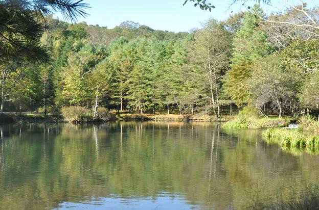 北大研究林の池
