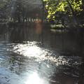 光の中の池