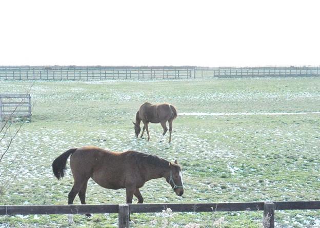 お食事中のお馬さんたち
