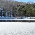 北大研究林の冬景色