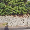 canon__80d__photography_ 's photo 2