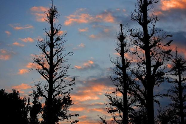 夕景 秋のシルエット