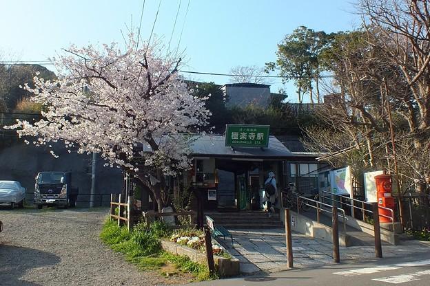 鎌倉 極楽寺駅と丸ポストと桜2