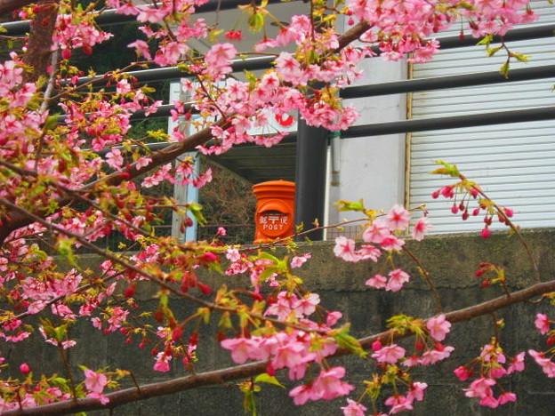 桜と丸ポスト 静岡県 001