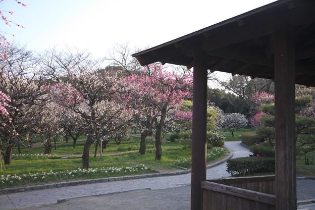 万博記念公園 201803 0036