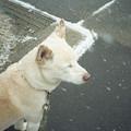 Photos: 寒ーい!