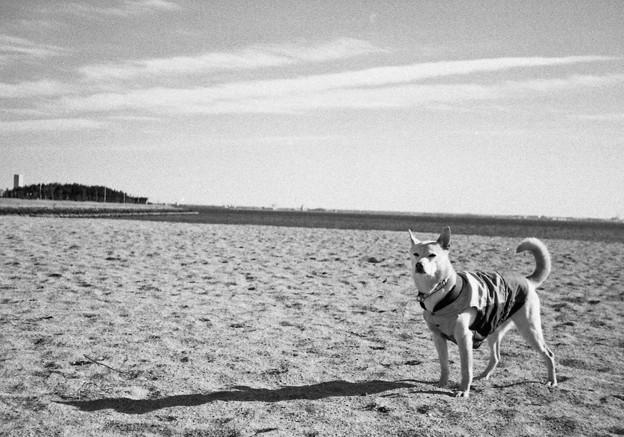 写真: 砂浜