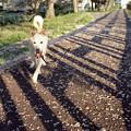 写真: 桜の道