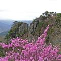 写真: 二ツ箭山とアカヤシオ