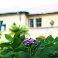 ~紫陽花の詩~