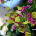 ~蝶の花が咲いている~