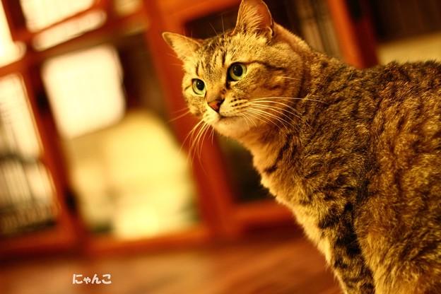 Photos: ~眼差し~