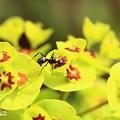 Photos: ~蟻さんは~