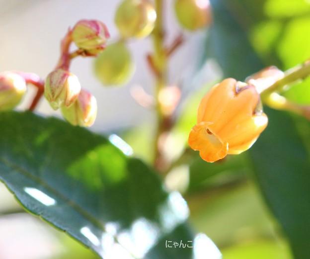 写真: ~オレンジ色の~
