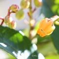 Photos: ~オレンジ色の~