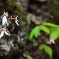 写真: ~岩場に咲く~