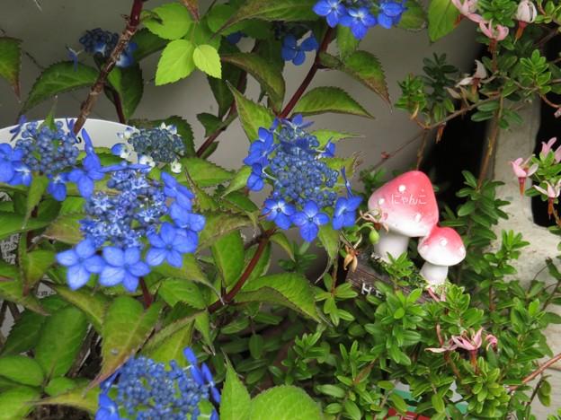 Photos: ~キノコの国の七変化~