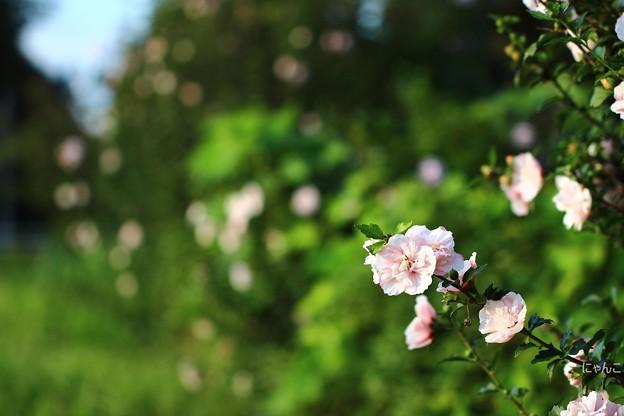 ~秘密の花園への道~
