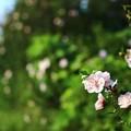 写真: ~秘密の花園への道~