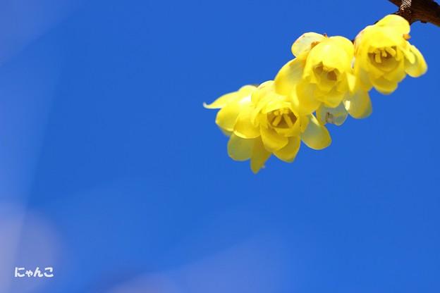 写真: ~冬の花~