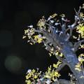 Photos: ~小鳥のお宿~