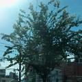 写真: 車窓から残暑