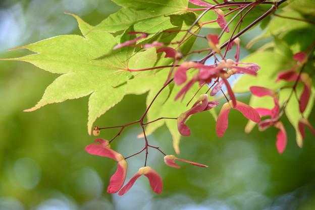 写真: 恒例の葉っぱ