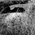 写真: 南房 館山 掩体壕