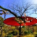 写真: 東京 下町 向島百花園