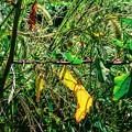 写真: 雑草の秋