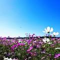 写真: 千葉県成田 甚兵衛公園