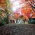 佐倉城址公園 初冬の賑わい