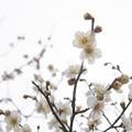 写真: 白い空に